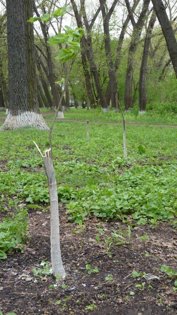 В александрийском парке произошла история - почти чеховский сюжет (фото) - фото 1