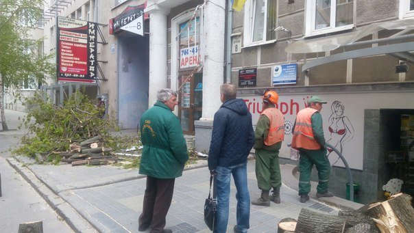 В центре Харькова на девушку упало дерево (ФОТО) (фото) - фото 1