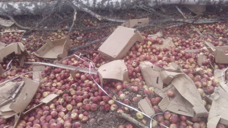 Яблоки на халяву или небывалый ажиотаж в Островском районе (фото) - фото 2