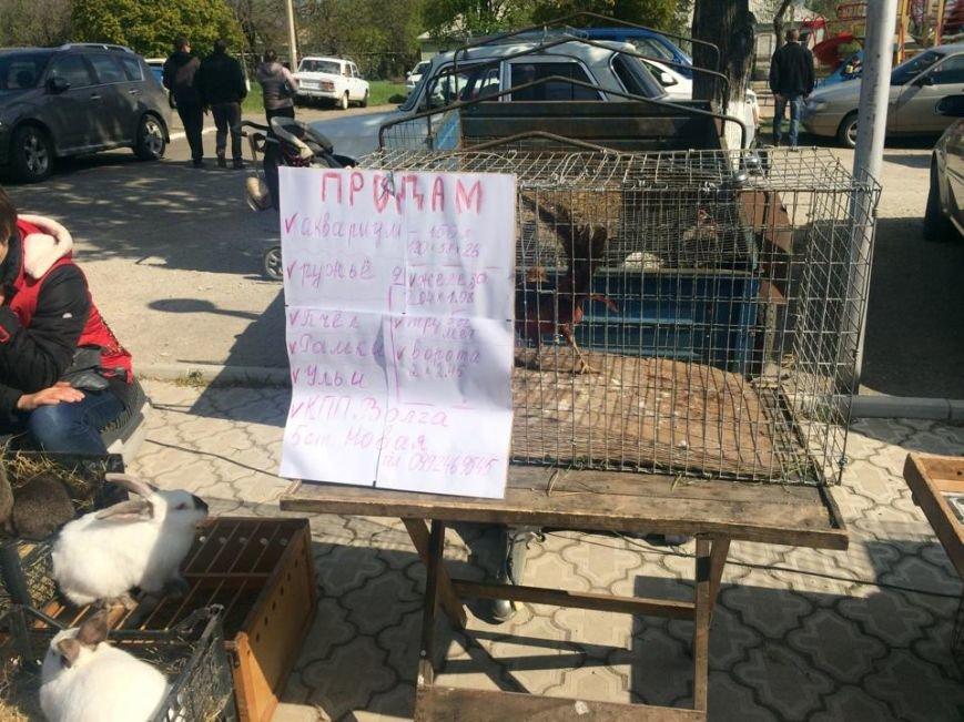 В Мангуше  впервые прошла  выставка -ярмарка голубей (ФОТО,ВИДЕО), фото-5