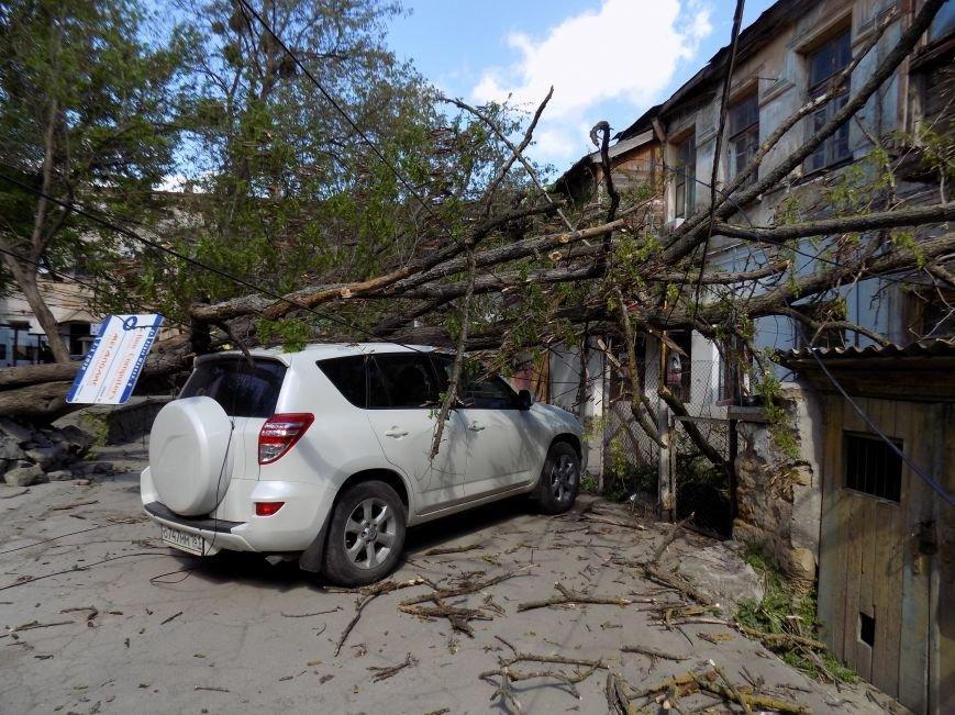 В центре Симферополя рухнувшее дерево придавило машину: Чудом никто не пострадал (ФОТО) (фото) - фото 3