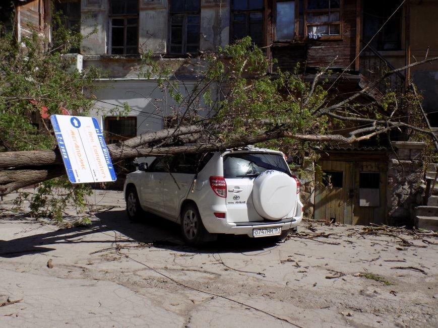 В центре Симферополя рухнувшее дерево придавило машину: Чудом никто не пострадал (ФОТО) (фото) - фото 1