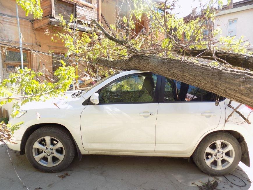 В центре Симферополя рухнувшее дерево придавило машину: Чудом никто не пострадал (ФОТО) (фото) - фото 4