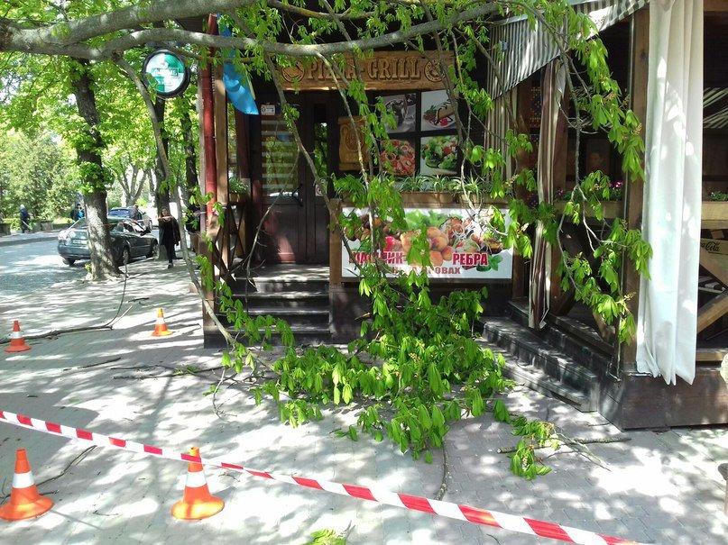 У Тернополі дерево зламалось навпіл і ледь не розчавило хлопця (Фото) (фото) - фото 1