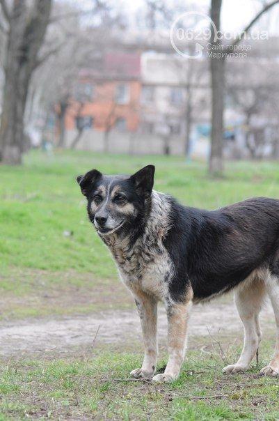 Мариупольцы провели ярмарку, чтобы  найти новый дома ждя слепого пса и его матери(ФОТО) (фото) - фото 1
