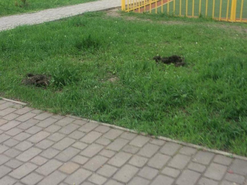 В мариупольском парке  50-летия Победы не досчитались пяти можжевеловых кустов (Фотофакт), фото-1