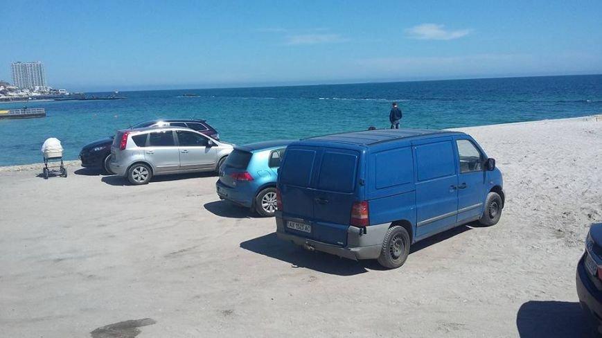В Одессе у моря обнаружили необычных пляжников (ФОТО) (фото) - фото 1