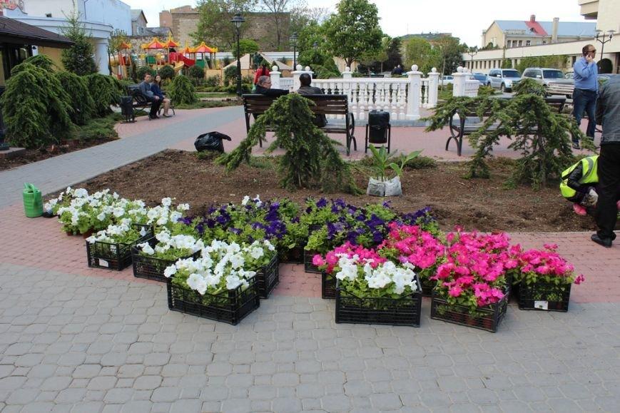 В скверах Симферополя начали высаживать цветы (ФОТО) (фото) - фото 1