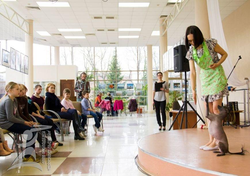 Кинологический фристайл состоялся в Пушкине в рамках акции