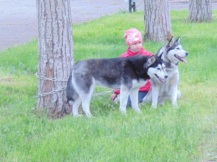 В Мариуполе заговорила собака (ФОТО+ВИДЕО), фото-2