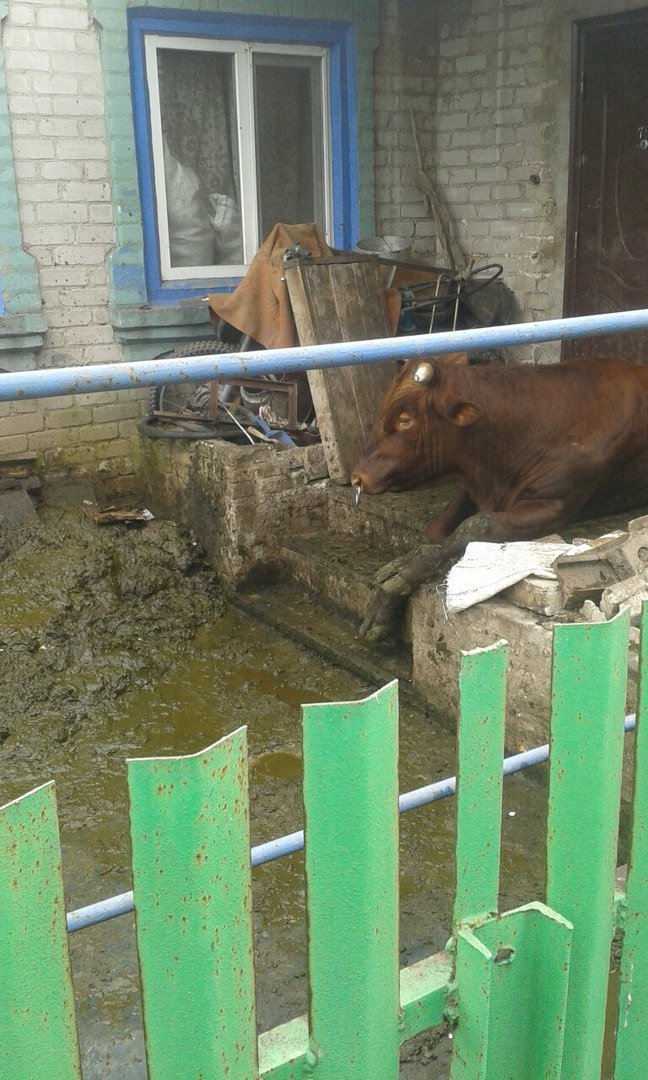 Довел соседей! В Мариуполе мужчина поселил 9 коров прямо в доме (ФОТО) (фото) - фото 1