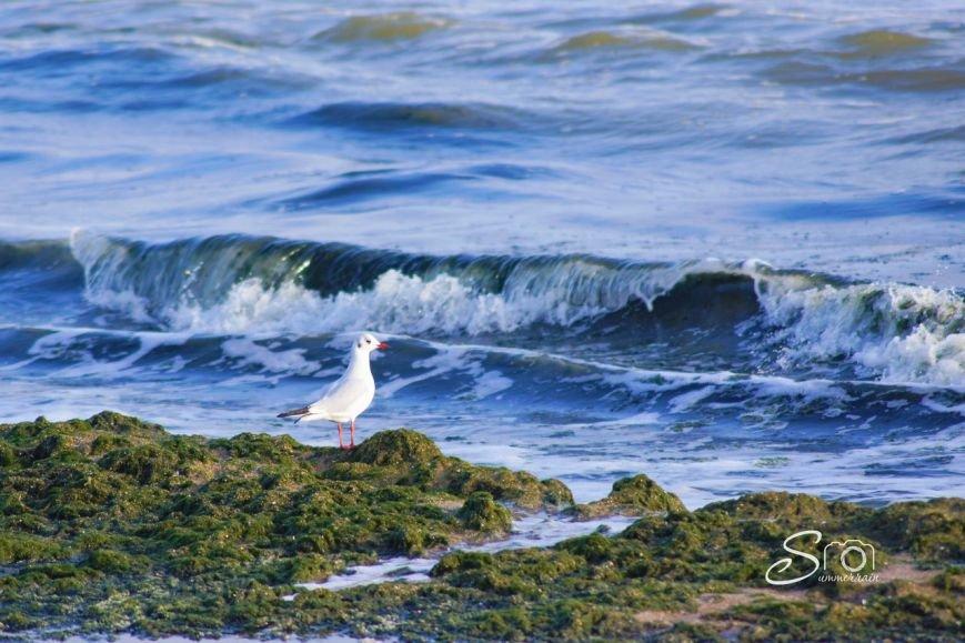 чайки одесса (1)