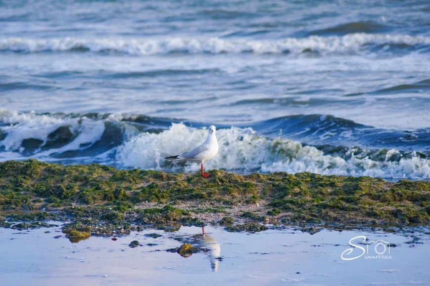 морская тина одесса