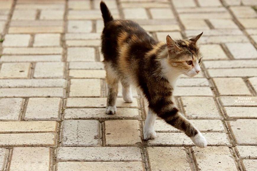 07cf2aac092655eeea349032596a4ee5 Сам ты «мимими»: фотоподборка самых неприветливых котов из Одессы