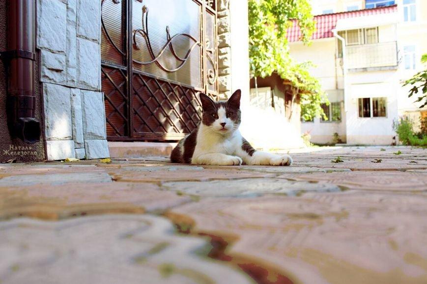0a1b639a8f52e421653f4a96077c7fe3 Сам ты «мимими»: фотоподборка самых неприветливых котов из Одессы