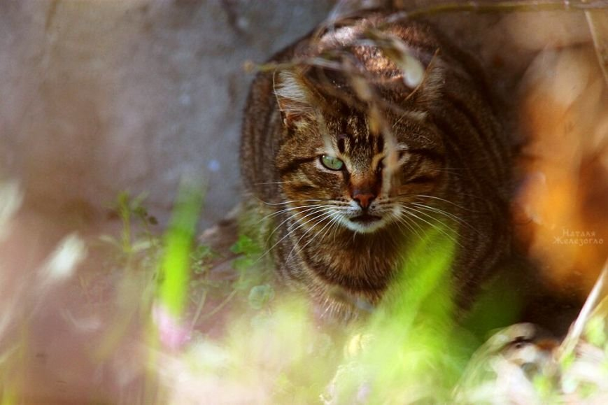 274b30a6a1a17726701d639e01c7c4b5 Сам ты «мимими»: фотоподборка самых неприветливых котов из Одессы