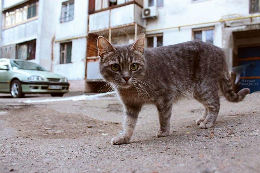 4e27cd2e5688c86a023ab86d23d7814e Сам ты «мимими»: фотоподборка самых неприветливых котов из Одессы
