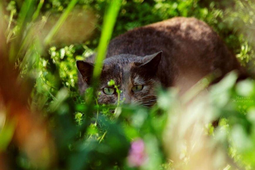 72b05b04625a8d0ec8efee0c05a71438 Сам ты «мимими»: фотоподборка самых неприветливых котов из Одессы