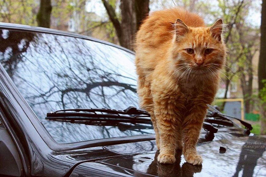 Сам ты «мимими»: фотоподборка самых неприветливых котов из Одессы (ФОТО) (фото) - фото 1