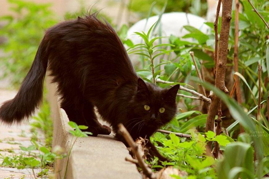 8fe9d1e7f85174f8e7a892b980c95f5d Сам ты «мимими»: фотоподборка самых неприветливых котов из Одессы