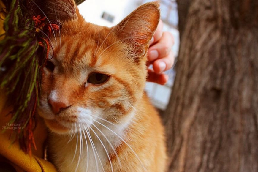 9097cd058e154acc154cdd391d853b94 Сам ты «мимими»: фотоподборка самых неприветливых котов из Одессы