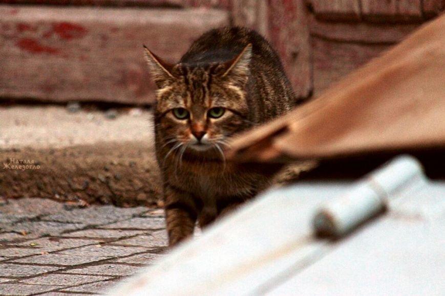 a67d66e095d51f86d01fabf5e7de8dcc Сам ты «мимими»: фотоподборка самых неприветливых котов из Одессы