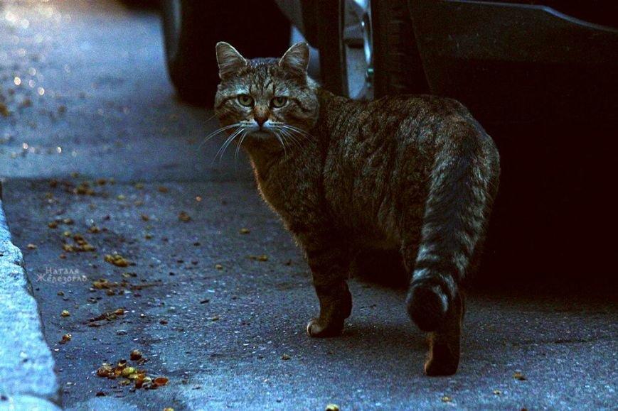 a84ce4770d86f4e45beba81a34dabf07 Сам ты «мимими»: фотоподборка самых неприветливых котов из Одессы