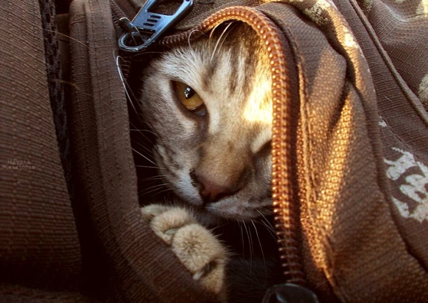 aa678142d3cc121f4529d49cbfce6fd7 Сам ты «мимими»: фотоподборка самых неприветливых котов из Одессы