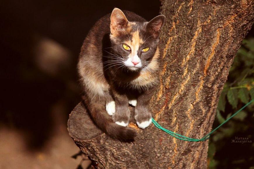 bf48c4dd32847b34a8f375fe34f8b6b6 Сам ты «мимими»: фотоподборка самых неприветливых котов из Одессы