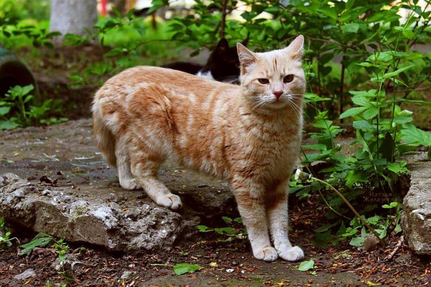 d252a7c8facb1ac7c165dc7ecdde6820 Сам ты «мимими»: фотоподборка самых неприветливых котов из Одессы