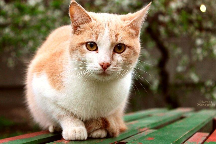 ea70b2cde8abe4f941a61ebe42c3f0c2 Сам ты «мимими»: фотоподборка самых неприветливых котов из Одессы