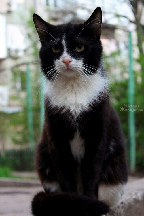 eaadd8a97fbf69fc212df74de1b5906f Сам ты «мимими»: фотоподборка самых неприветливых котов из Одессы