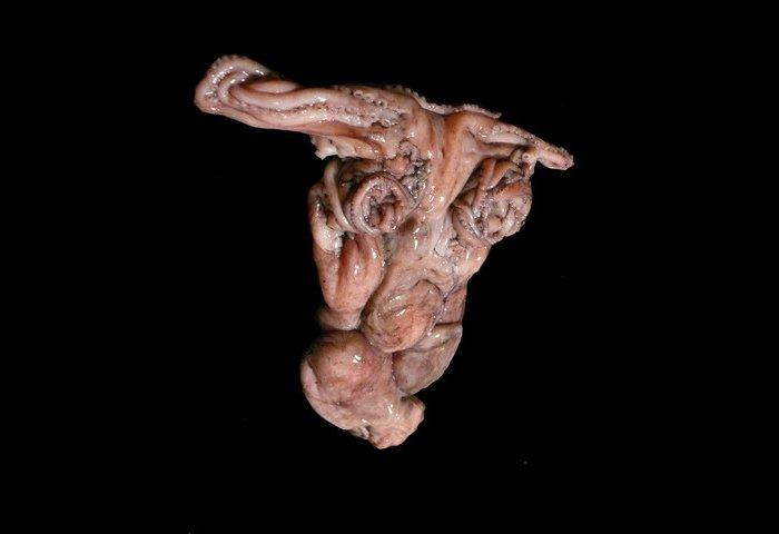 Талантливая криворожанка прославилась на весь мир благодаря осьминогам (ФОТО) (фото) - фото 2