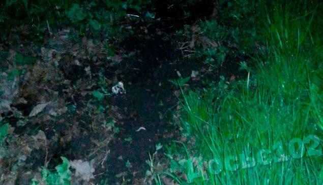 Смертельна ДТП: на Тернопільщині подружжя потрапило у криваву аварію (Фото) (фото) - фото 3