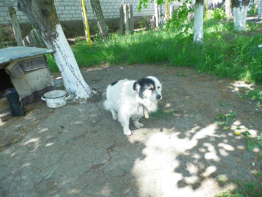 В Первомайске остро стоит вопрос отсутствия приюта для животных (фото) - фото 2