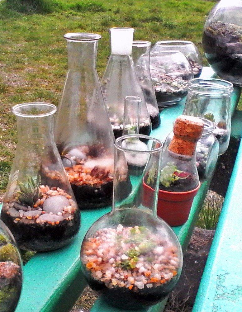 Как сделать удивительный «бутылочный сад» своими руками: опыт одесситки (ФОТО) (фото) - фото 12