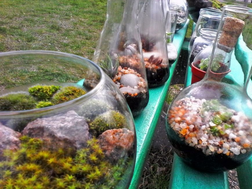Как сделать удивительный «бутылочный сад» своими руками: опыт одесситки (ФОТО) (фото) - фото 11