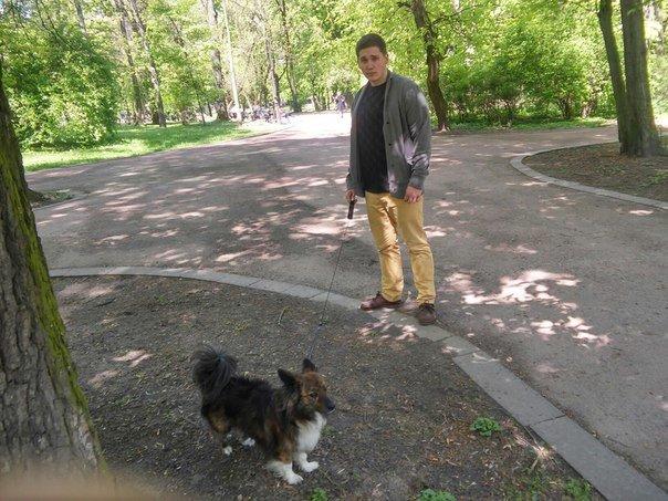 Власники собак схвально ставляться до штрафів за не прибирання за своїм улюбленцем (ФОТО) (фото) - фото 1
