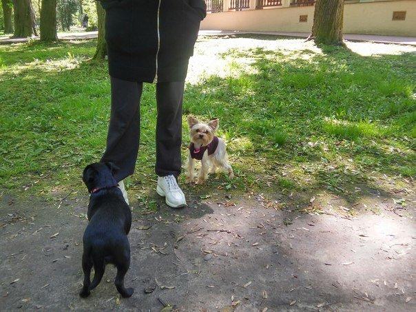 Власники собак схвально ставляться до штрафів за не прибирання за своїм улюбленцем (ФОТО) (фото) - фото 7
