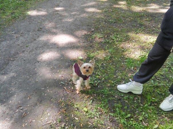 Власники собак схвально ставляться до штрафів за не прибирання за своїм улюбленцем (ФОТО) (фото) - фото 5