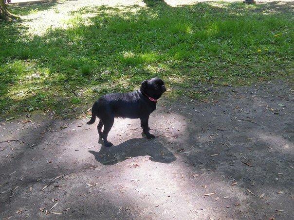 Власники собак схвально ставляться до штрафів за не прибирання за своїм улюбленцем (ФОТО) (фото) - фото 6