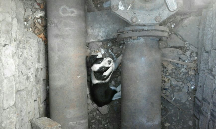 В центре Мариуполя в люке застряли щенки (ФОТО) (фото) - фото 1
