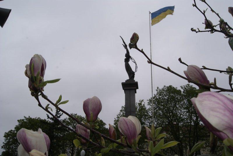 Напередодні Великодня у Тернополі квітнуть рідкісні дерева  (Фото), фото-1