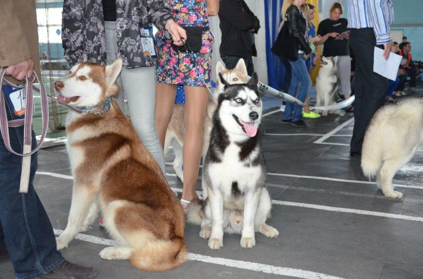 В Мариуполе лхаса апсо стала лучшей собакой Приазовья (ФОТО+ВИДЕО), фото-12