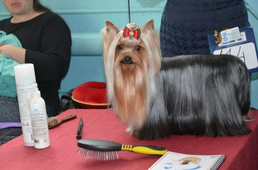 В Мариуполе лхаса апсо стала лучшей собакой Приазовья (ФОТО+ВИДЕО), фото-17