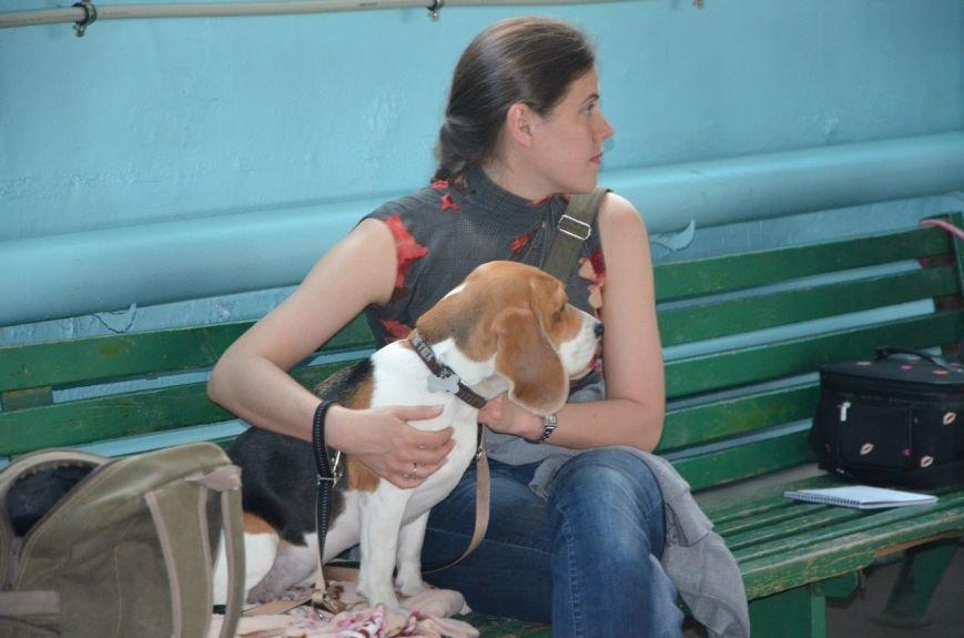 В Мариуполе лхаса апсо стала лучшей собакой Приазовья (ФОТО+ВИДЕО), фото-15