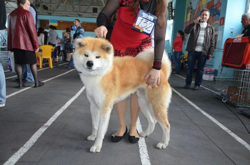 В Мариуполе лхаса апсо стала лучшей собакой Приазовья (ФОТО+ВИДЕО), фото-14