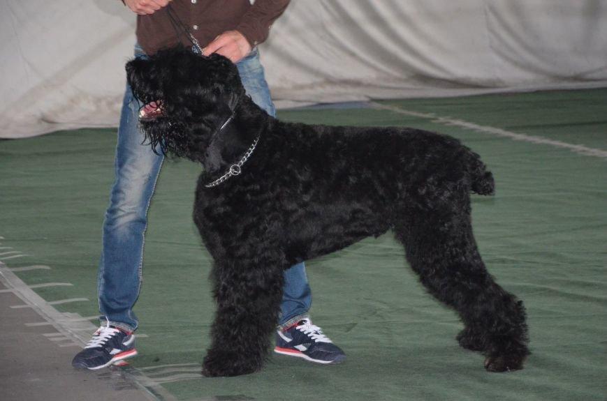 В Мариуполе лхаса апсо стала лучшей собакой Приазовья (ФОТО+ВИДЕО), фото-8