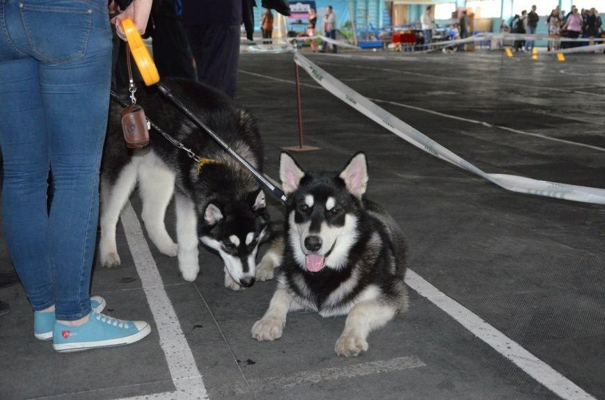 В Мариуполе лхаса апсо стала лучшей собакой Приазовья (ФОТО+ВИДЕО), фото-4