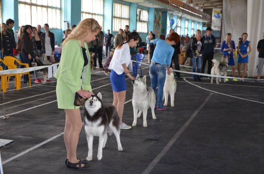 В Мариуполе лхаса апсо стала лучшей собакой Приазовья (ФОТО+ВИДЕО), фото-5